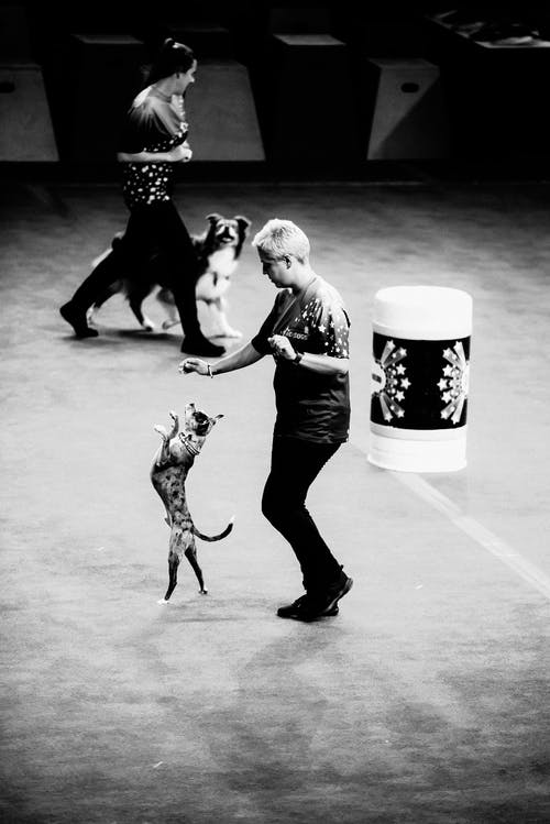 Grayscale Photography of Women Performing With Trained Animals