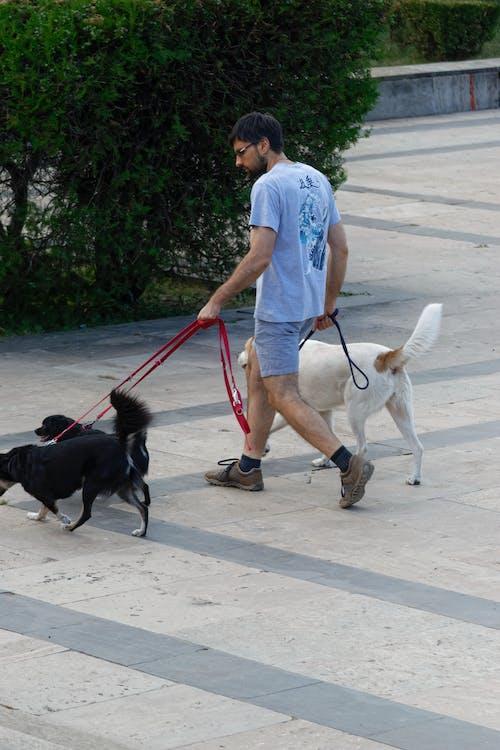 Darmowe zdjęcie z galerii z młody człowiek z trzema psami chodzić