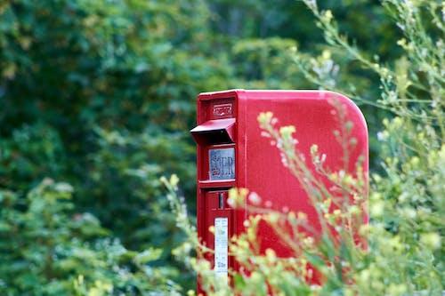 Foto d'estoc gratuïta de bústia, correu reial, verdor, vermell
