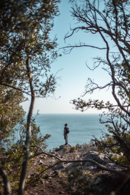 Fotos de stock gratuitas de al aire libre, árbol, aventura, de pie