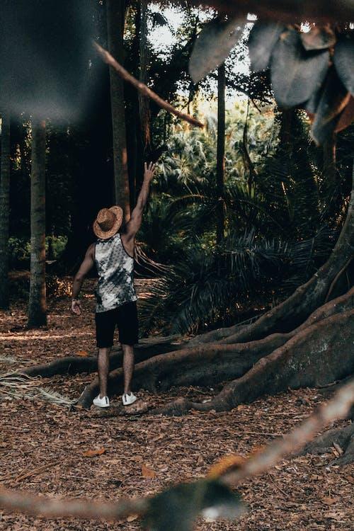 Ảnh lưu trữ miễn phí về cây, công viên, Đàn ông, đạt
