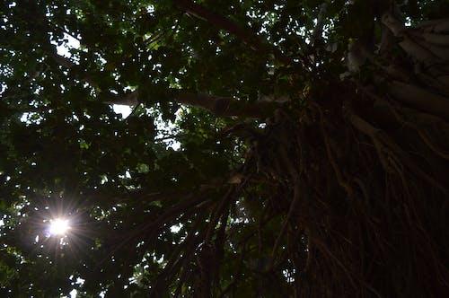 午後, 太陽の光, 木の無料の写真素材