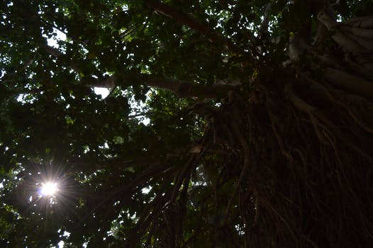 Free stock photo of innovative box innovation free stock photo of tree afternoon noon sunrays publicscrutiny Image collections