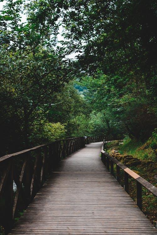 คลังภาพถ่ายฟรี ของ ต้นไม้, ทางเดินกระดาน, ทำด้วยไม้, ฟุตบาธ