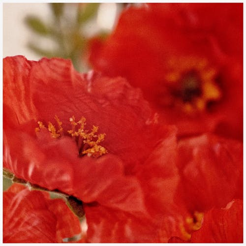 Free stock photo of artificial flowers, bokeh, fujifilm, red flowers