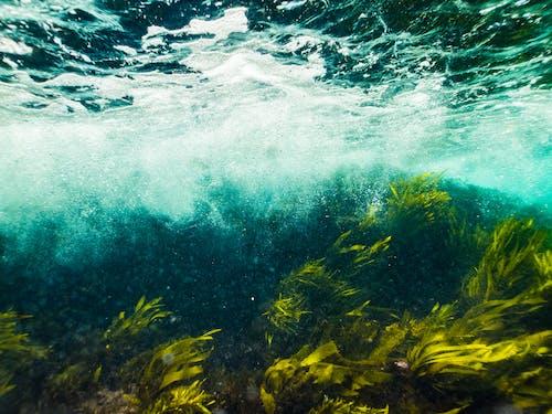 Ingyenes stockfotó fény, nyár, óceán, szín témában