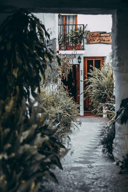 Gratis lagerfoto af arkitektur, gade, kraftværker, planter