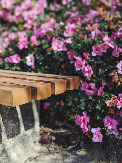 Close-Up Photo Of Bench Near Flowers