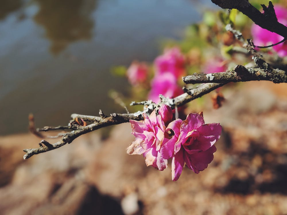 กลีบดอก, กลีบดอกไม้, ก้าน