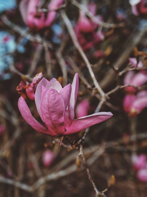 Бесплатное стоковое фото с лепестки, максросъемка, флора, цвести