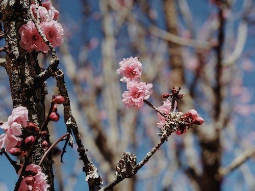 Бесплатное стоковое фото с ботаника, ботанический сад, бутон, ветвь