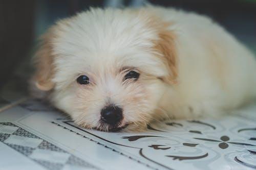 Foto stok gratis anak anjing, anjing, berbulu, binatang