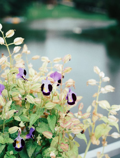 Foto d'estoc gratuïta de bonic, flor bonica, flors boniques