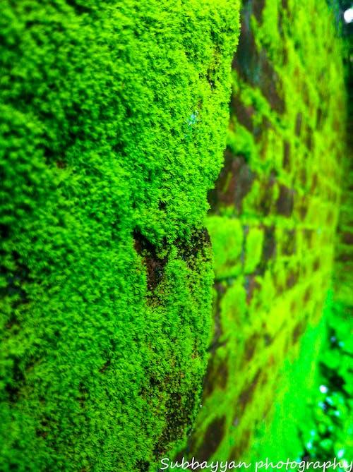 Free stock photo of beauty in nature, brick, brick wall