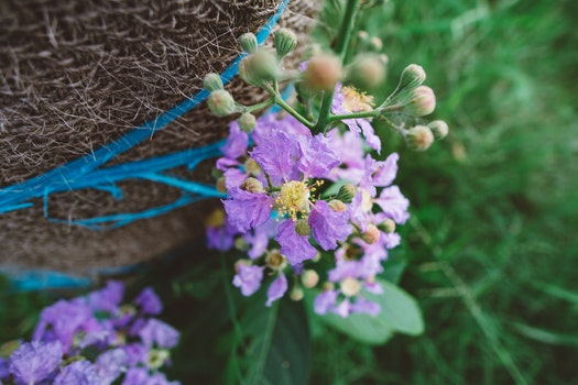 Free stock photo of flowers, grass, petals, outdoors