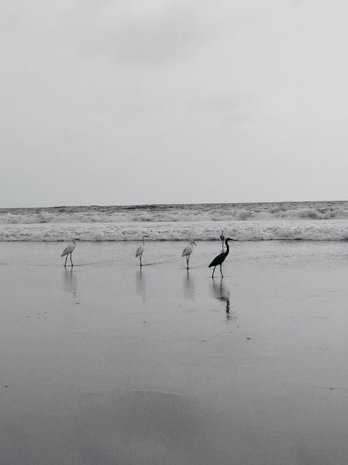 Free stock photo of beach, beauty in nature, black and white