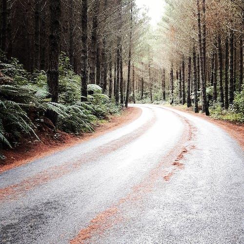 Kostnadsfri bild av skog, träd, väg