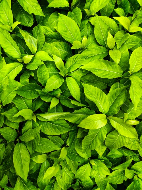 Close-up Photo of Green Leafed Plant