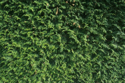 Free stock photo of bush, fence, green