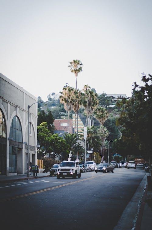 Photos gratuites de arbres, automobile, autoroute, centre-ville