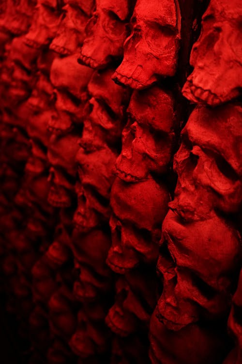 50 Amazing Skull Photos Pexels Free Stock Photos
