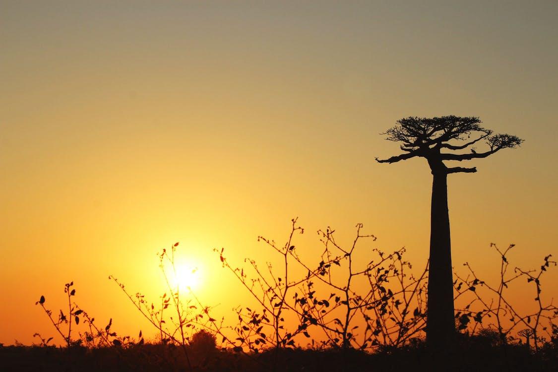 2k17, baobá, lindo pôr do sol