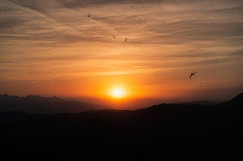 Imagine de stoc gratuită din apus, Italia, pasăre, soare