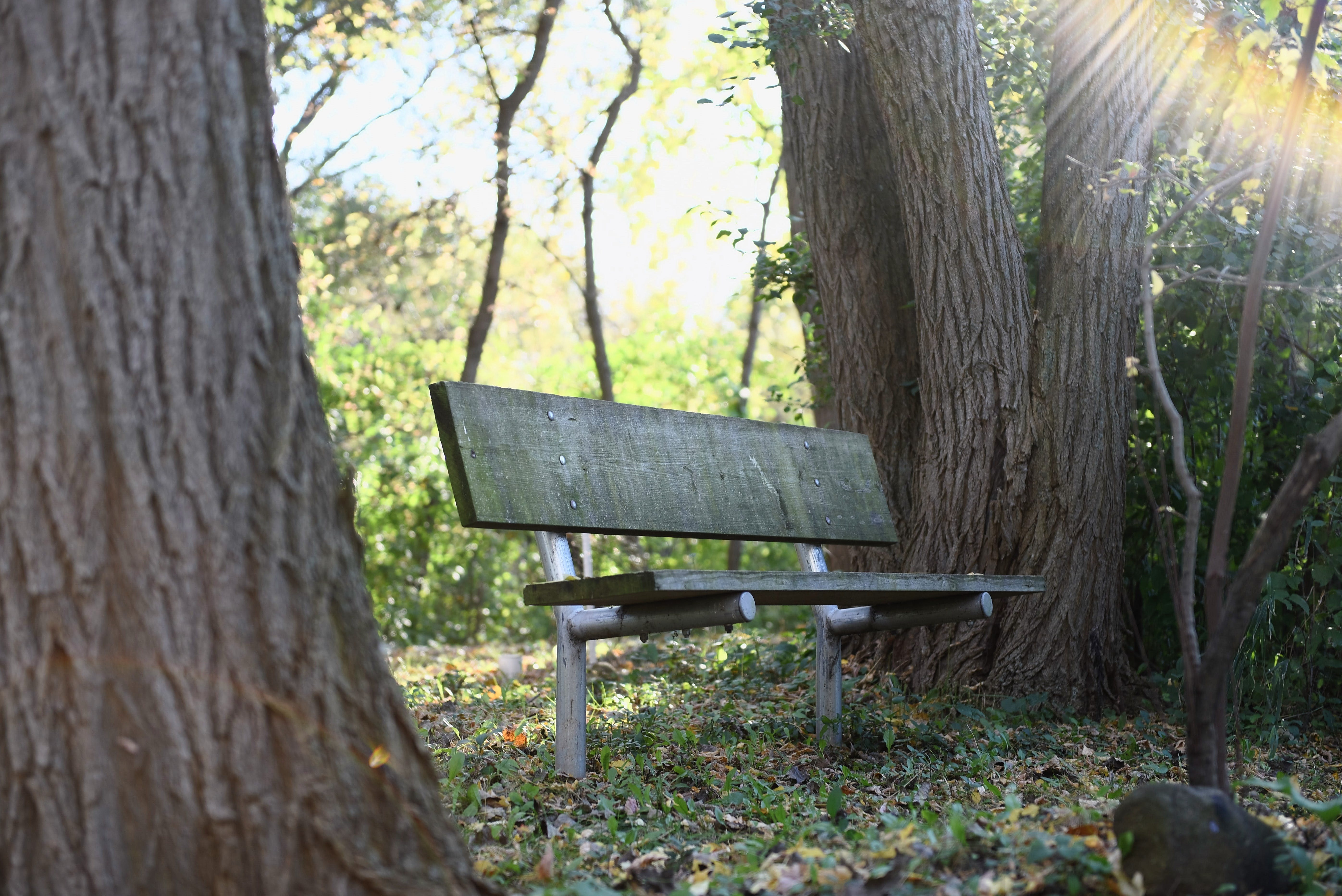 Wooden Bench Beside Tree