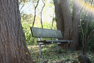 wood, bench, forest
