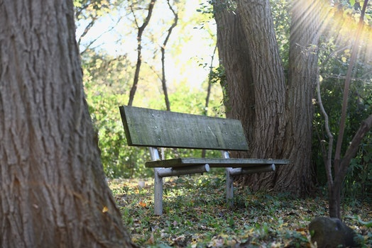 Free stock photo of wood, bench, forest, trees