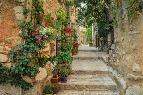 Narrow Paved Walkway With Decorative Flowering Plants