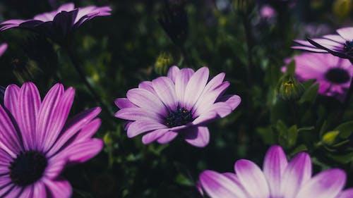 Darmowe zdjęcie z galerii z dzień, fioletowy, kwiat, liście