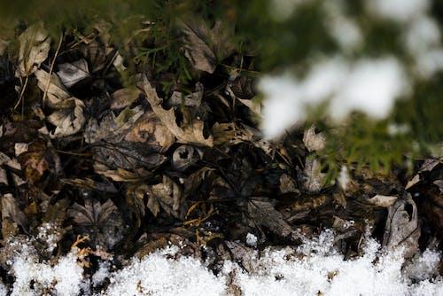 d610, 冬季, 加拿大, 宏觀 的 免费素材照片