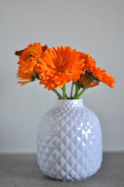 Free stock photo of beautiful flowers, calendula, flower vase
