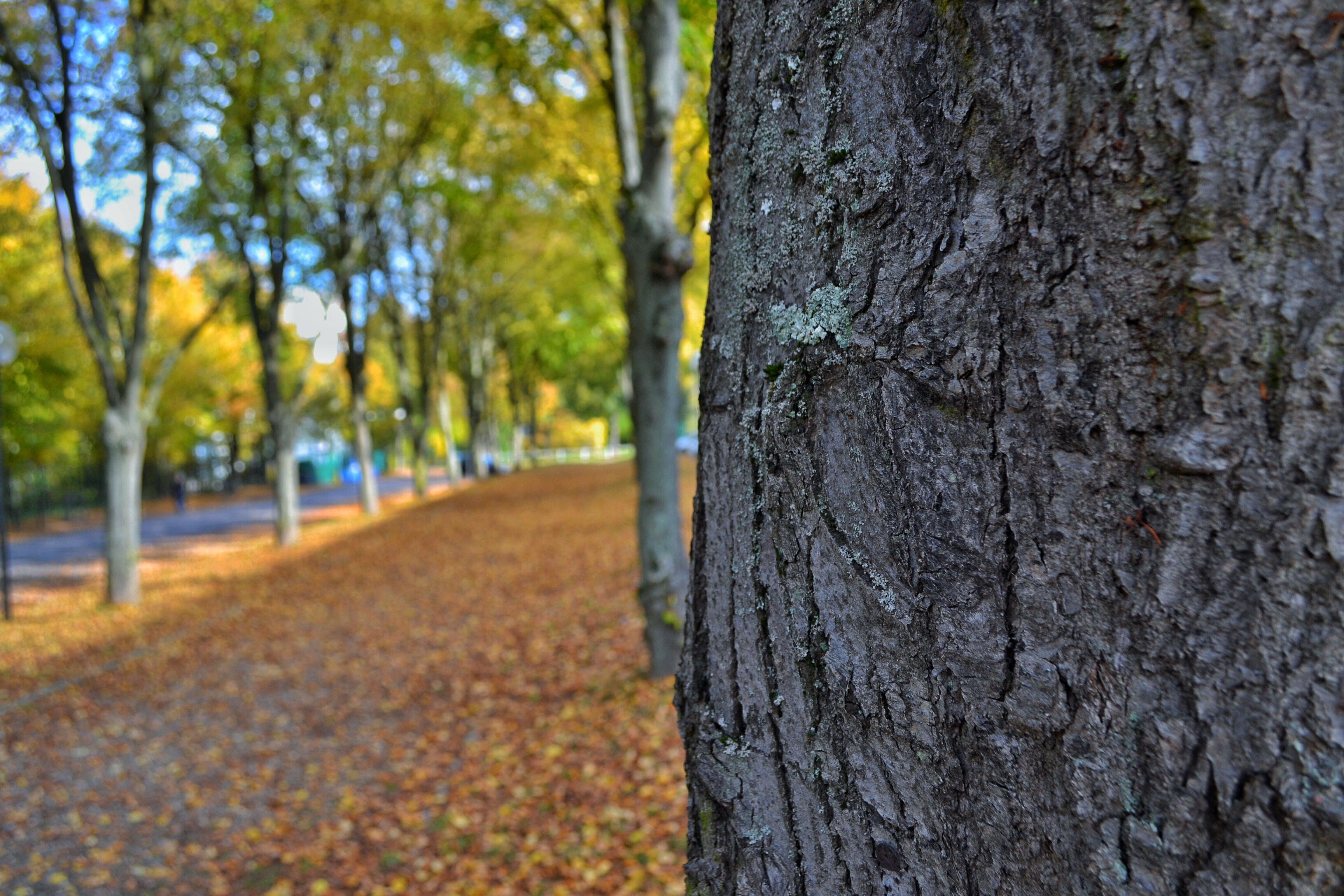 Δωρεάν στοκ φωτογραφιών με δέντρα, κορμός δέντρου, προοπτική, φλοιός δέντρου