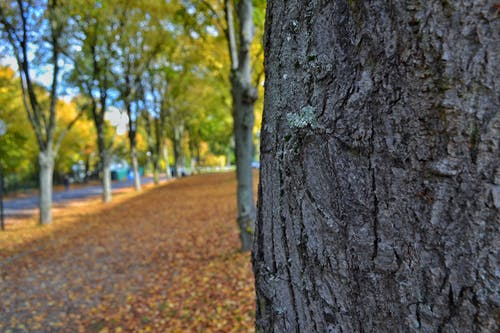 คลังภาพถ่ายฟรี ของ ต้นไม้, ธรรมชาติ, มุมมอง, ลำต้น