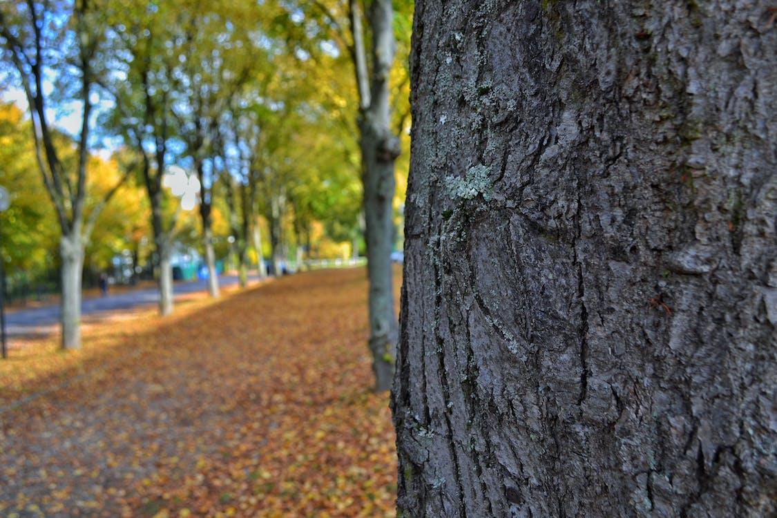Close-up Photo of Gray Tree
