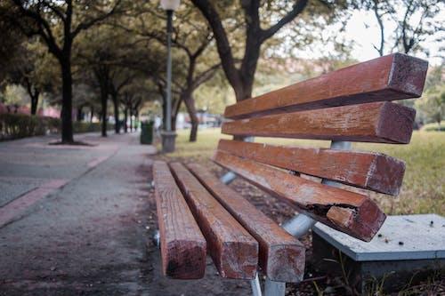 公園, 原本, 城市, 座位 的 免费素材照片