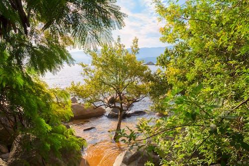 Безкоштовне стокове фото на тему «атлантичний океан, блакитне небо, блакитний фон, дерево»