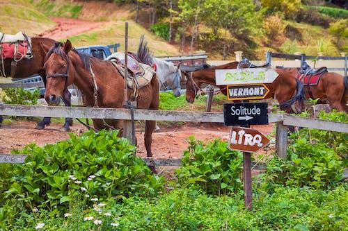 Безкоштовне стокове фото на тему «aras, cavalo, життя ферми, земля»