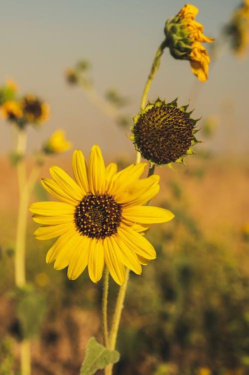 Imagine de stoc gratuită din adâncime de câmp, afară, botanic, centrale