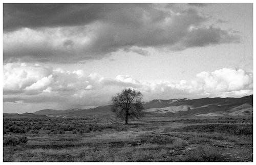 Fotos de stock gratuitas de árbol, blanco y negro, campo, cielo