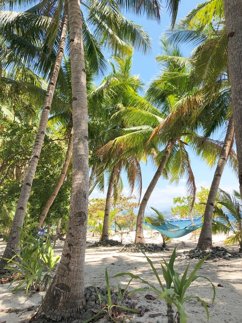Δωρεάν στοκ φωτογραφιών με δέντρα, παράδεισος, παραλία, τροπικός