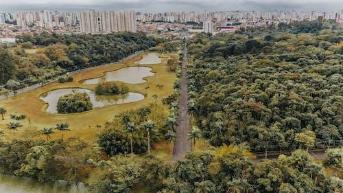 Foto d'estoc gratuïta de a l'aire lliure, arbres, arquitectura, ciutat