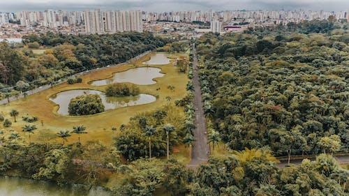 Darmowe zdjęcie z galerii z central park, miasto, nowy jork, park centralny