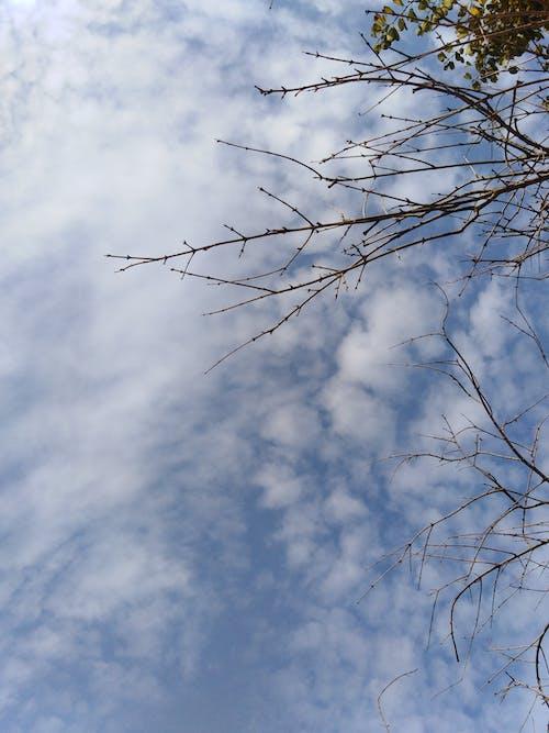 Darmowe zdjęcie z galerii z # natura # jesień # drzewo # chmury #recent #fotografia