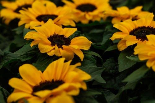 Imagine de stoc gratuită din adâncime de câmp, colorat, creștere, culoare