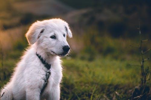 Cachorro Blanco