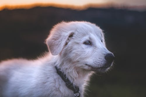 Close-up Photography Of White Dog