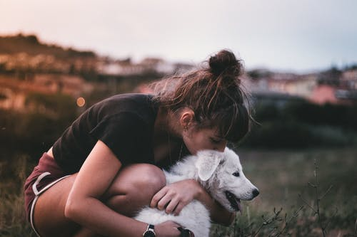 Imagine de stoc gratuită din afecțiune, animal de casă, animal de companie, câine